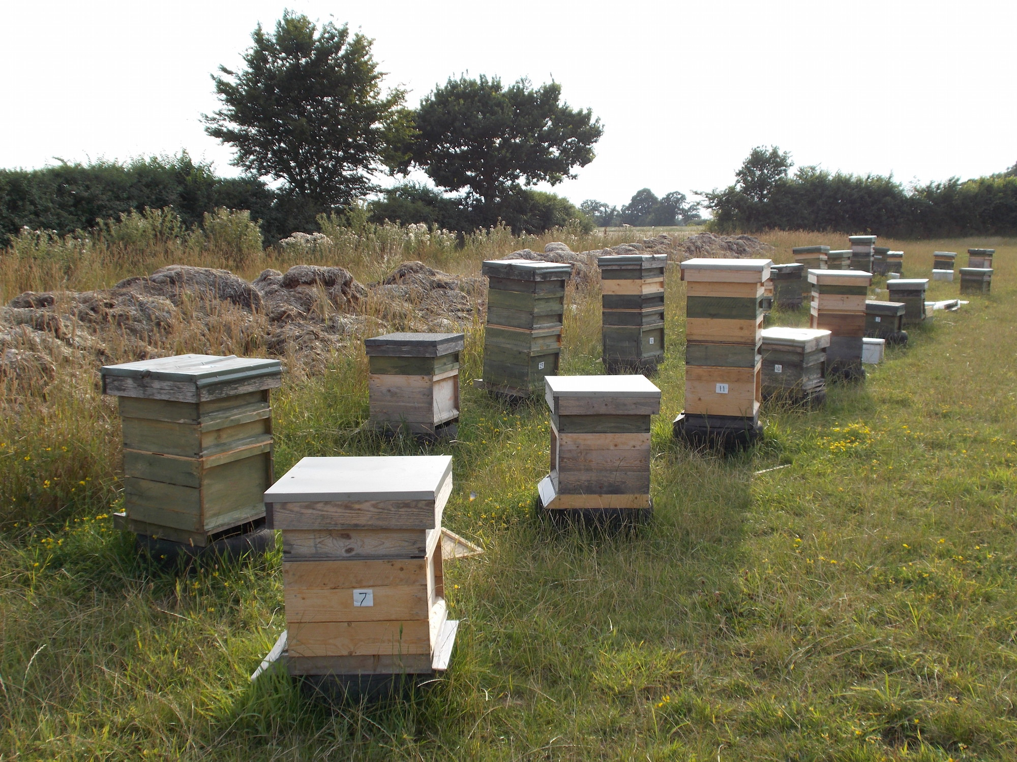 hives at Hill Farm