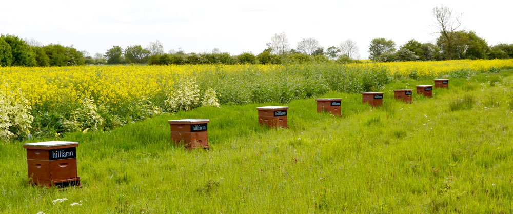 Hill Farm's Bee Hives