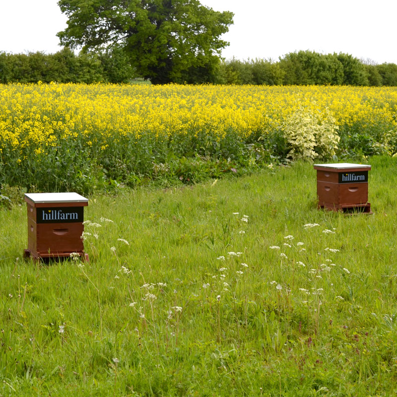 Our bee hives by the rapeseed fields