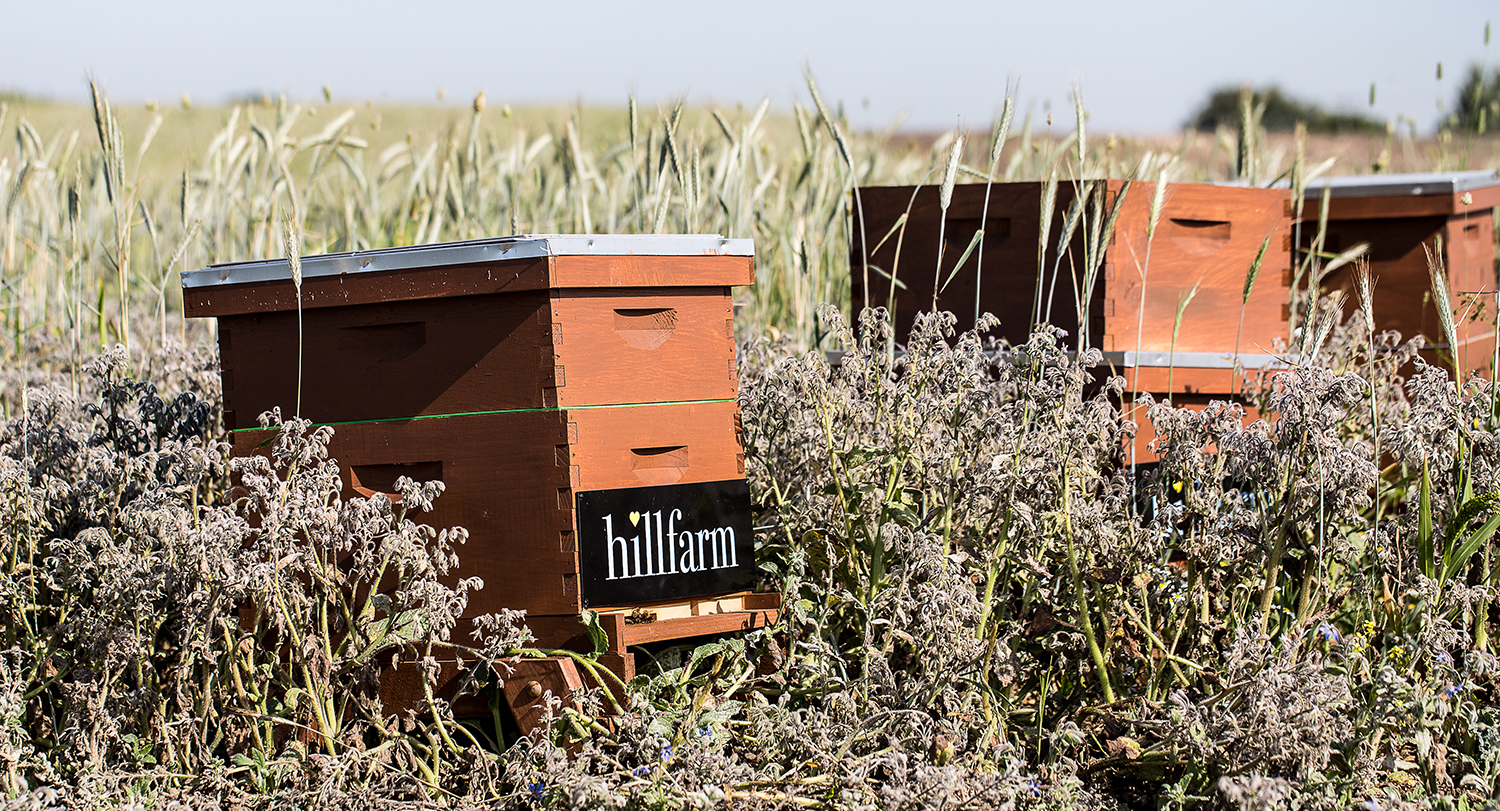 Bee Hives at Hill Farm Suffolk